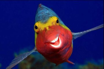Foto graciosa pescado